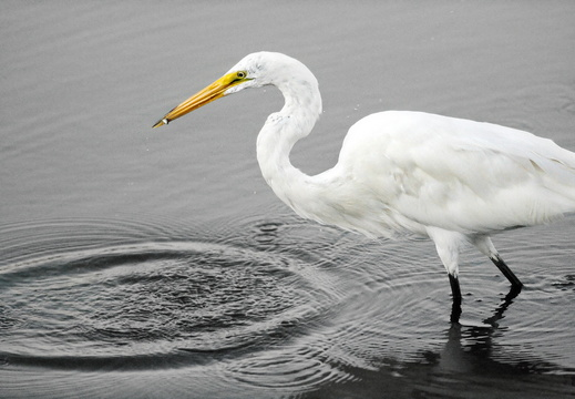 greategret1